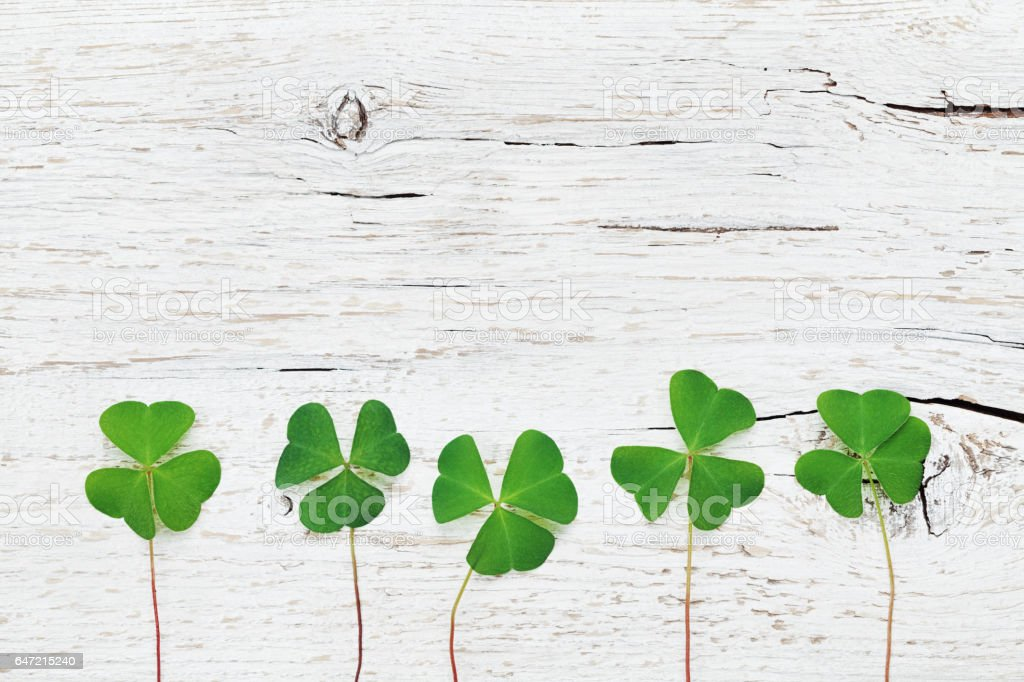Green shamrock or clover on Saint Patricks Day background. stock photo
