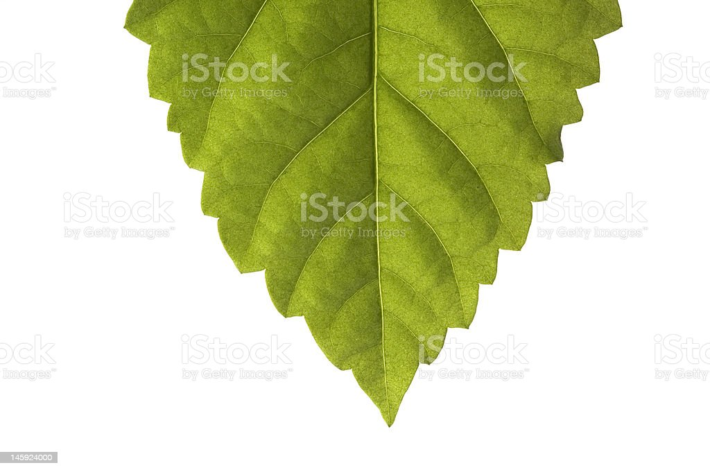 Green sheet. royalty-free stock photo