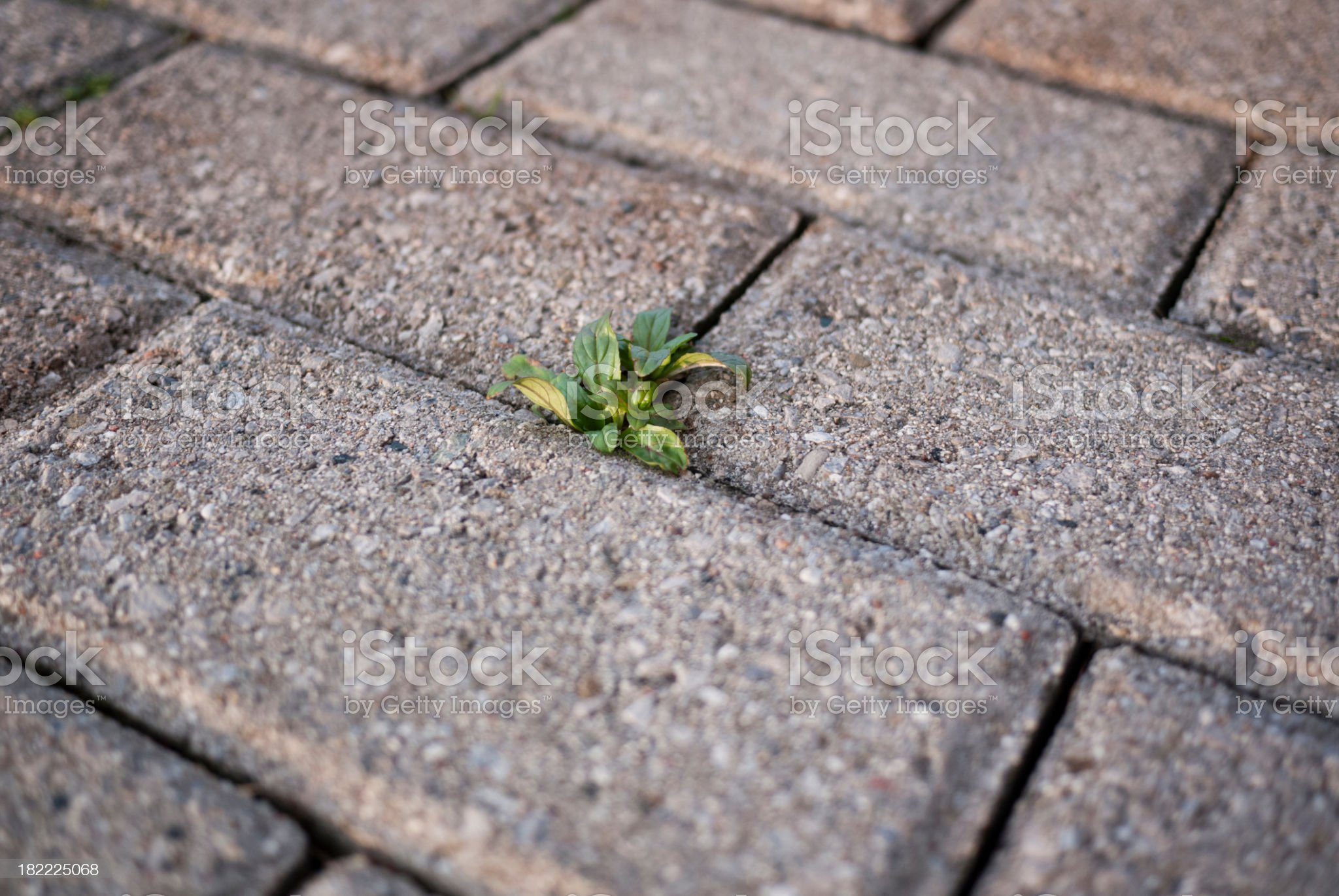 Green Shoots royalty-free stock photo