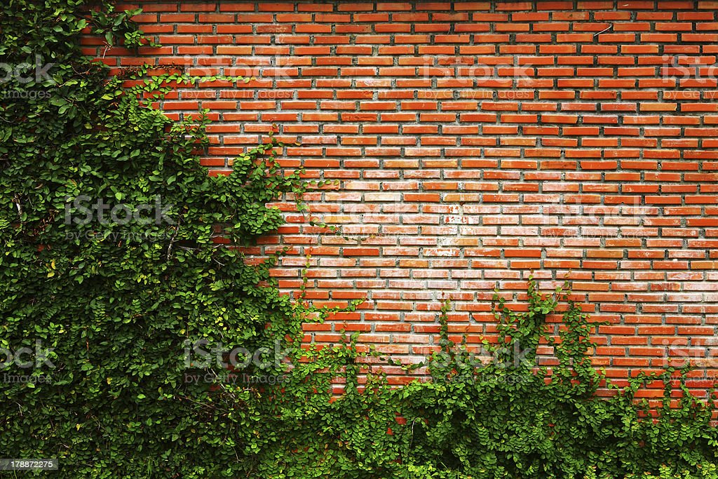 Green shrubbery against an old brick wall stock photo