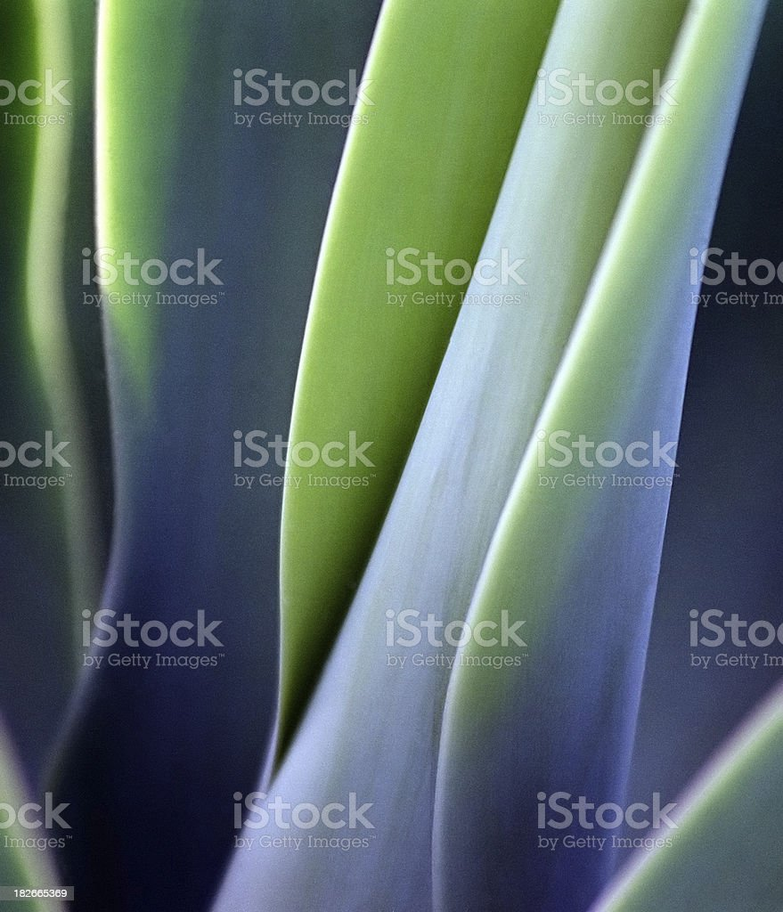 Green Smooth Leaves stock photo