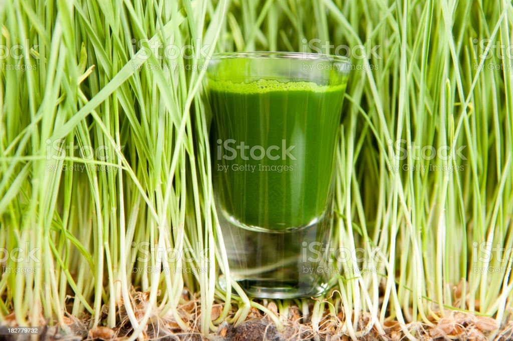 Green smoothie in a glass among wheatgrass shoots stock photo