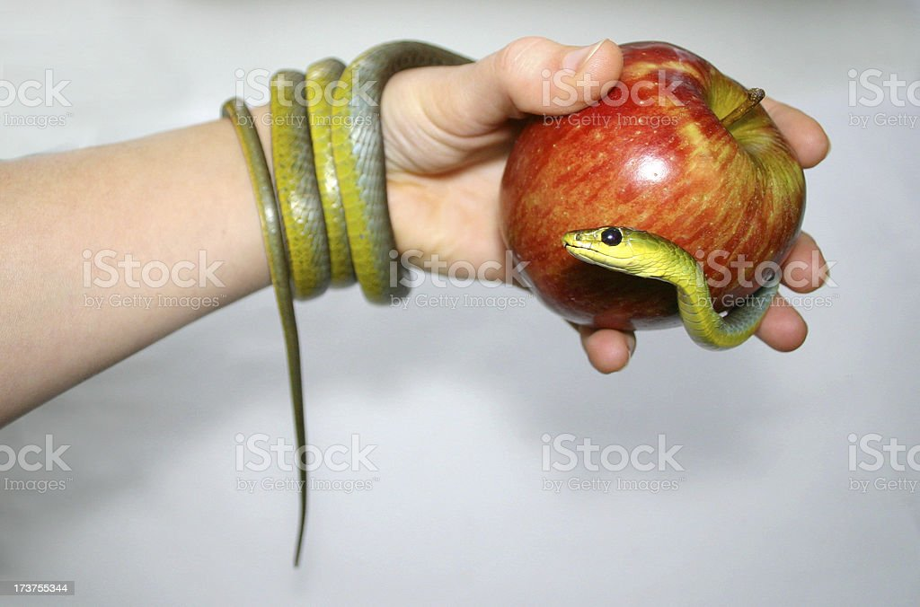 green snake apple and hand stock photo