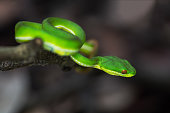 green snake on branch in forest