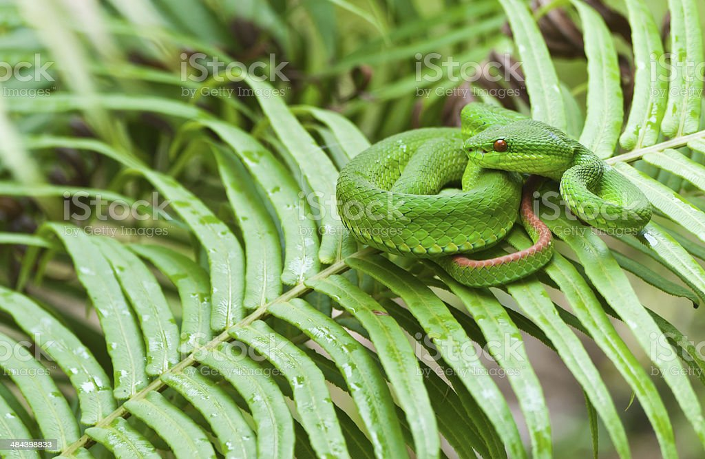 Green snake on leafs. stock photo