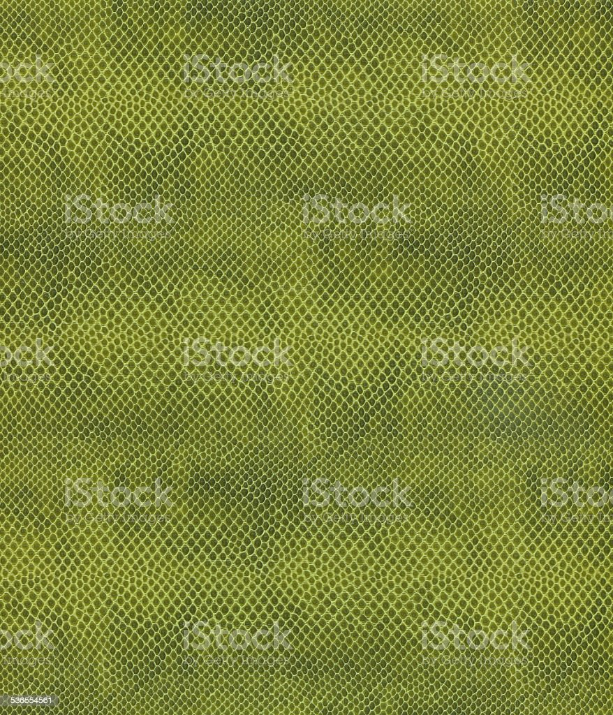 Green Snake Skin stock photo