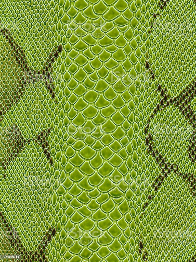 Green snake skin texture background stock photo