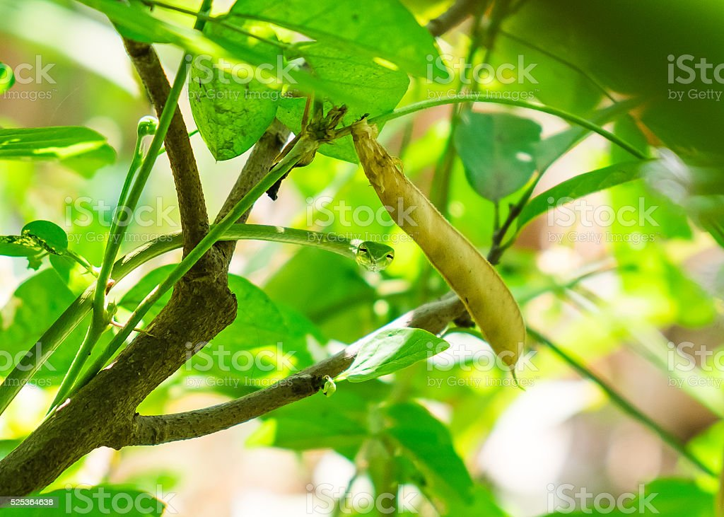 Green snake small hold tree branch stock photo