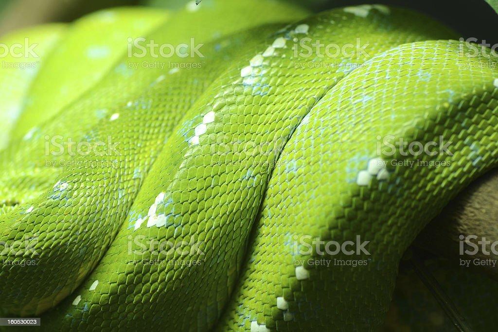 Green snake texture royalty-free stock photo