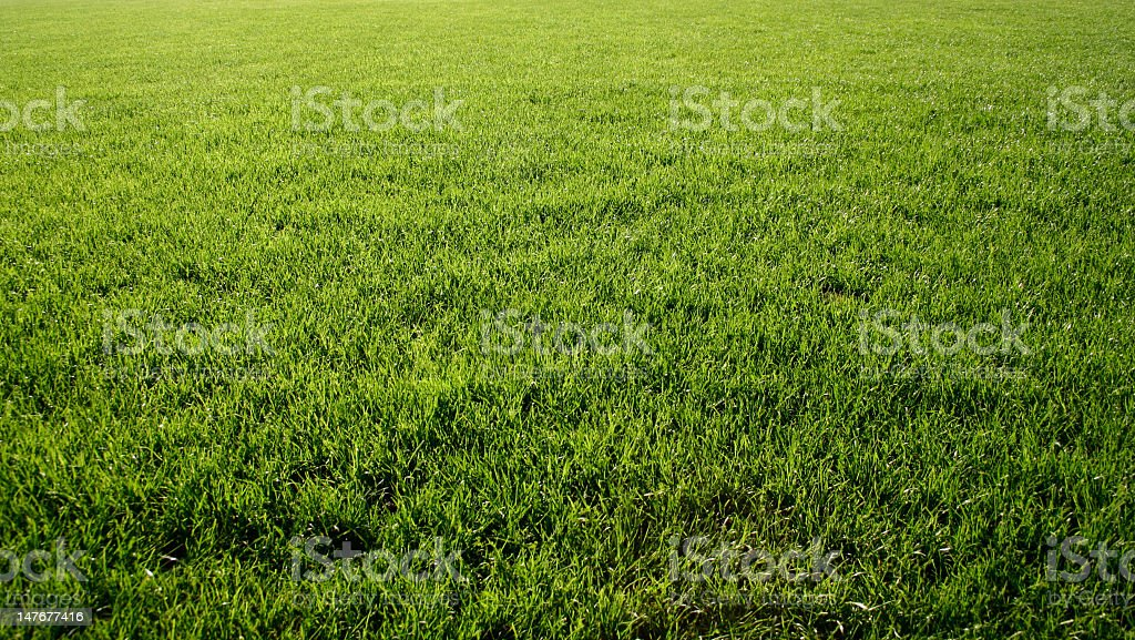 Green soccer field with beautiful grass stock photo