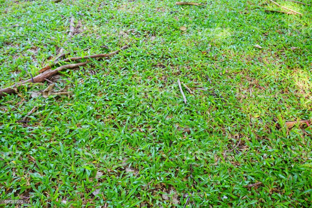 Field, Front or Back Yard, Land, Lawn