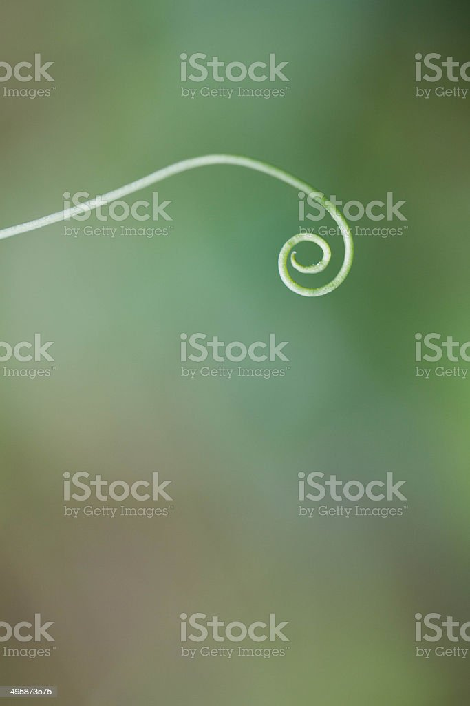 green spiral stock photo