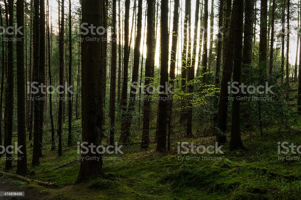 Green Spring Colors In The Forest. stock photo
