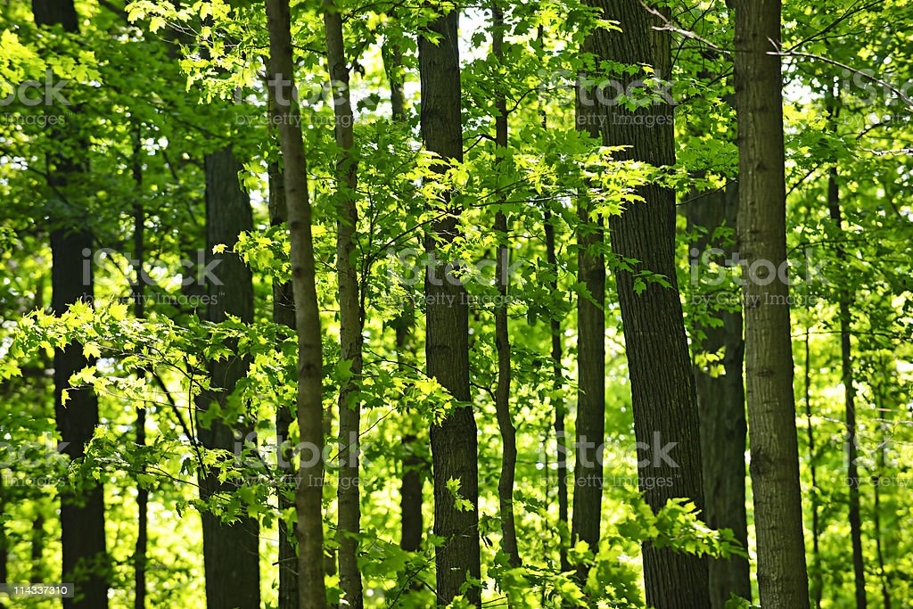 Green spring forest stock photo