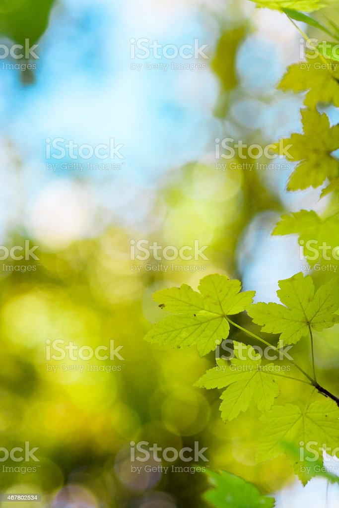 Green spring leaves stock photo