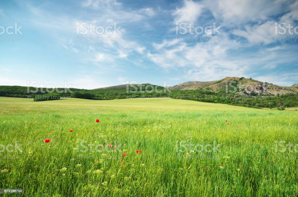 Green spring meadow stock photo
