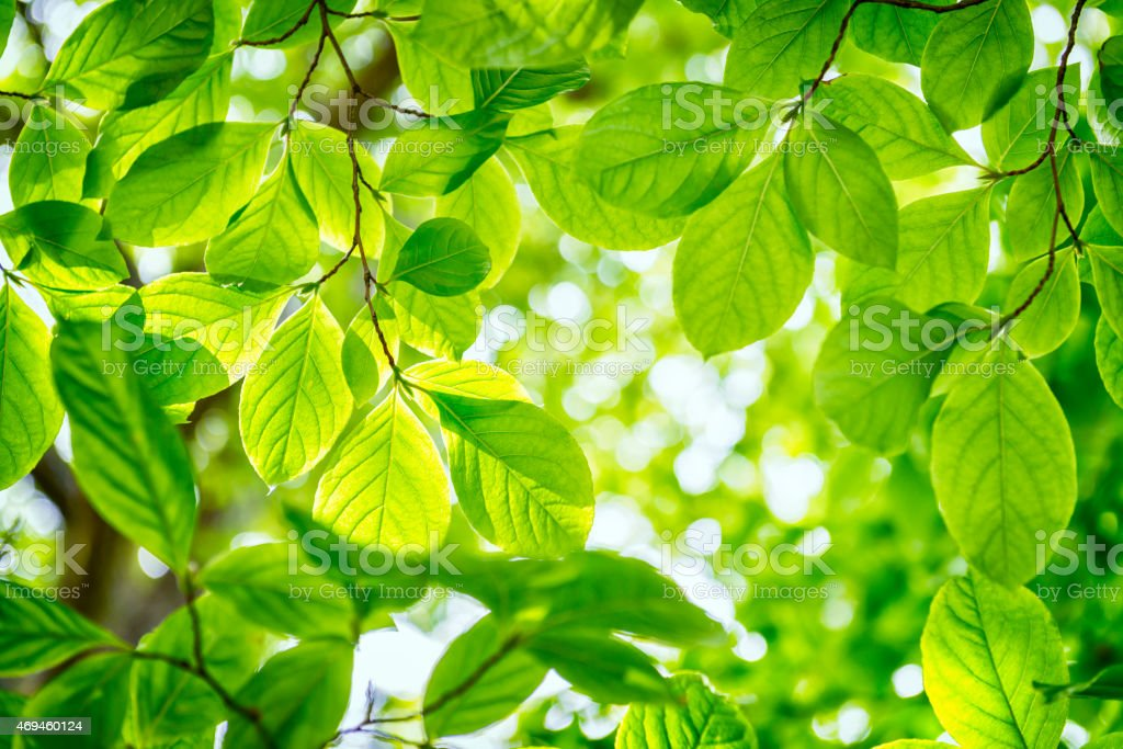 Green Spring stock photo