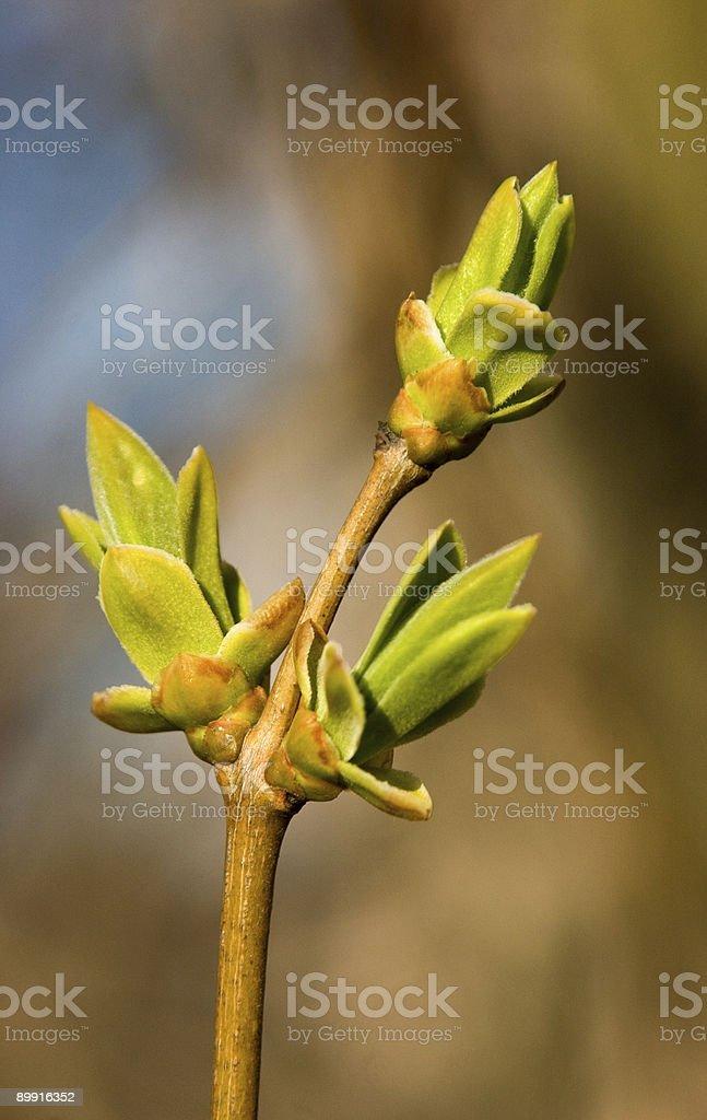Green spring royalty-free stock photo