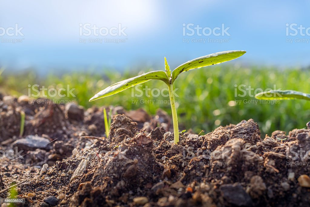 Green sprout growing from the ground stock photo