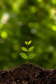 Green sprout growing