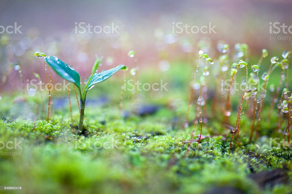 Green sprout growing stock photo