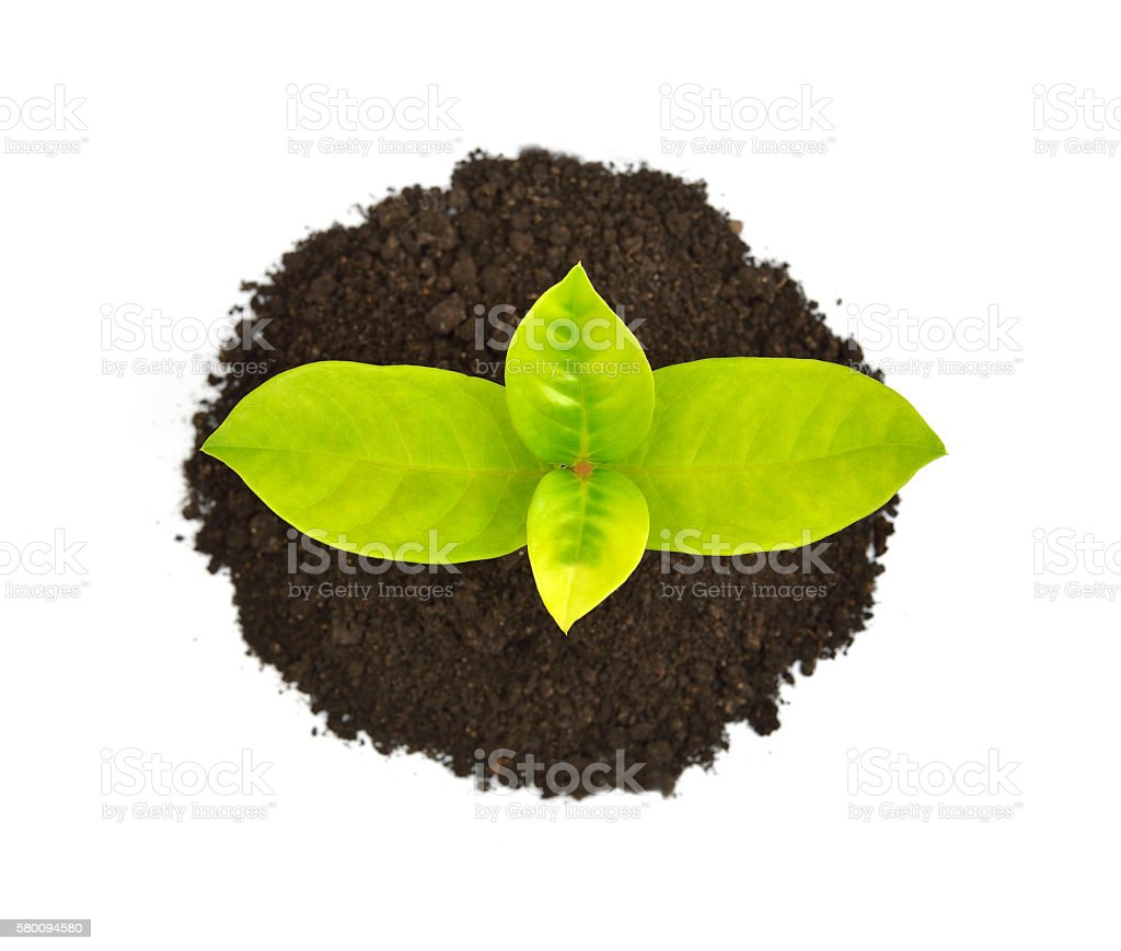 Green sprout stock photo