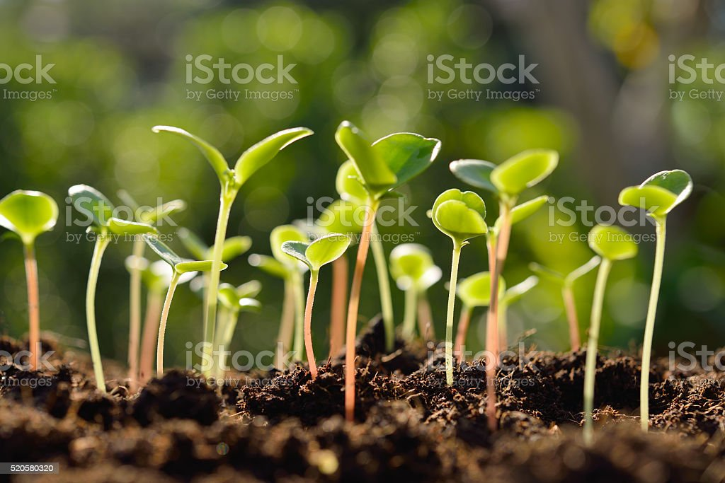Green sprouts stock photo