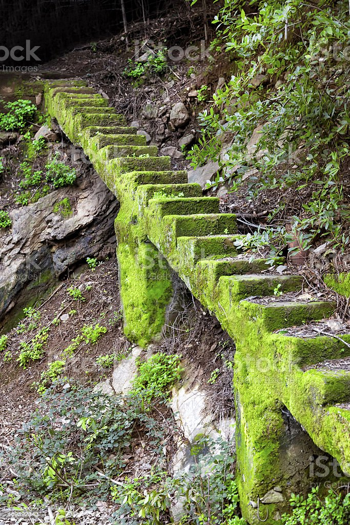 Green Stair stock photo