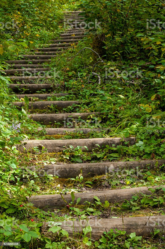 Green Stairs stock photo