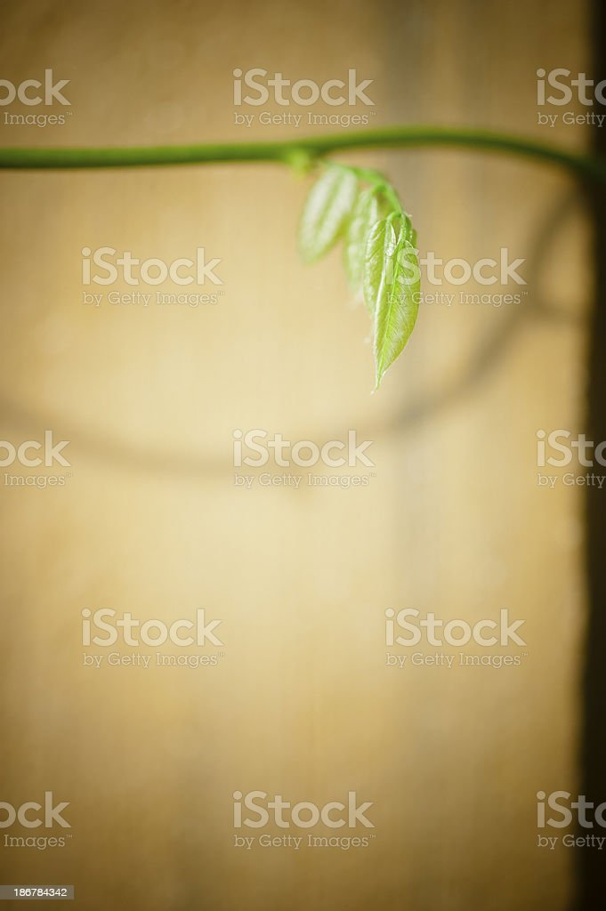Green Stem with New Leaves stock photo