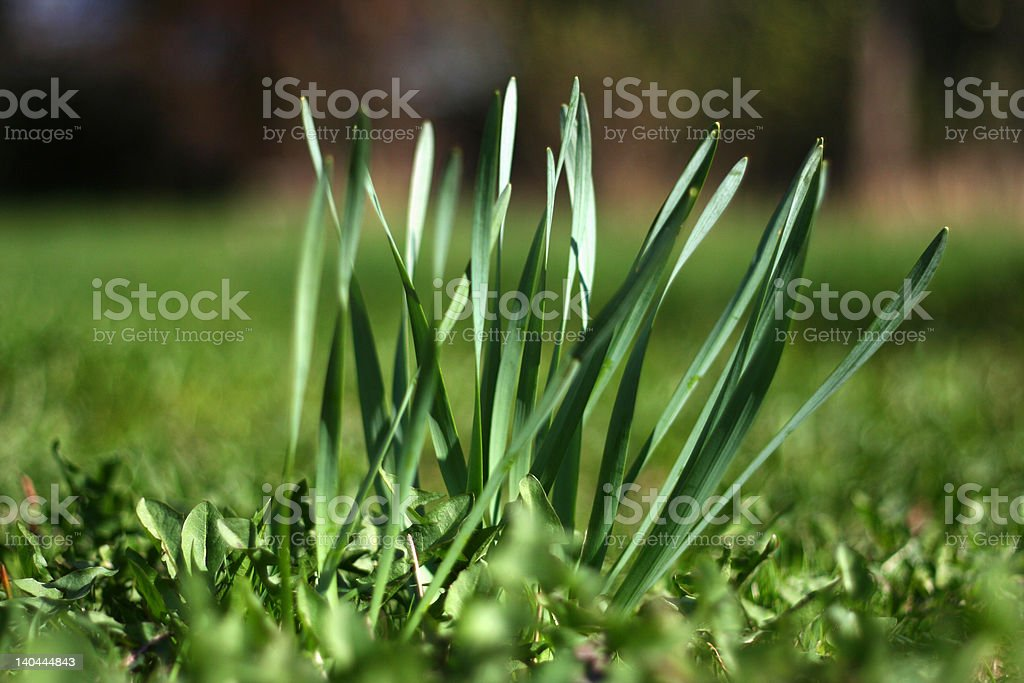 Green stems royalty-free stock photo
