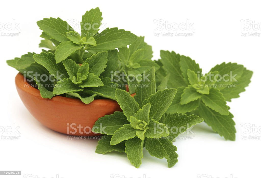 Green stevia leaves with a small bowl stock photo