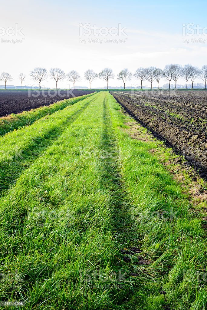 Green strip between fields with tire tracks of a tractor stock photo