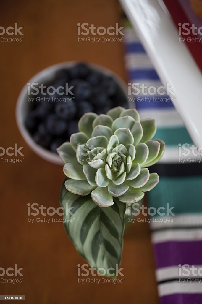 Green succulent plant on breakfast table royalty-free stock photo