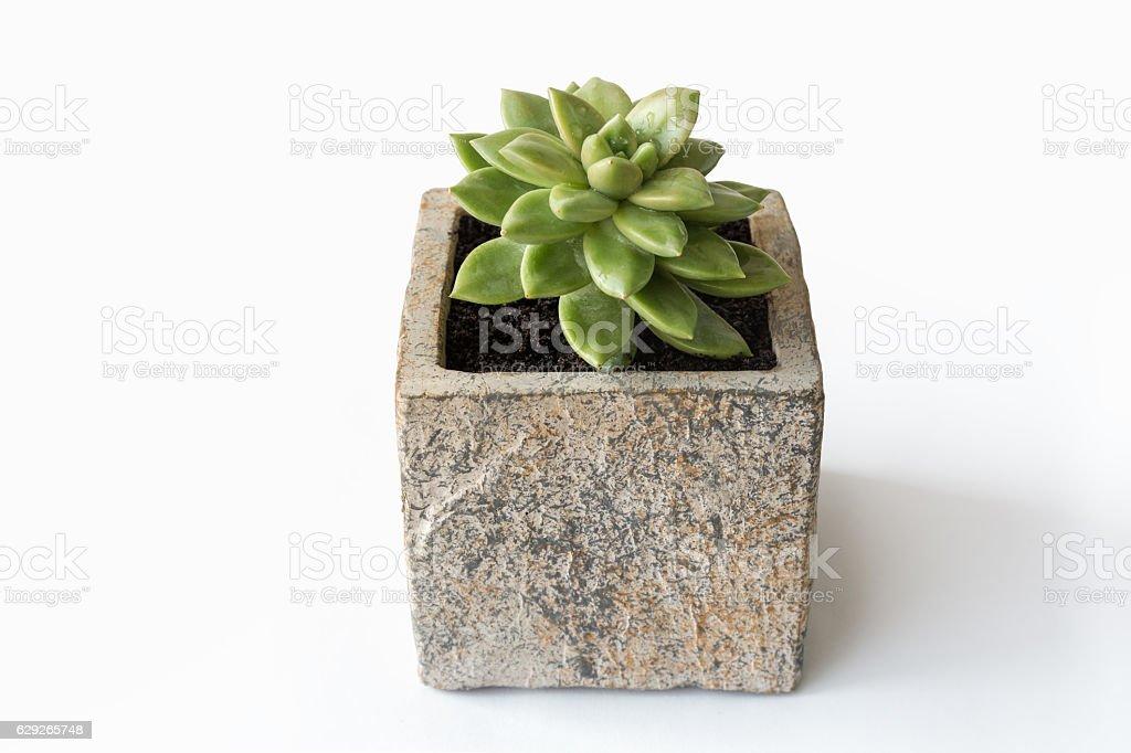 green succulent plant stock photo