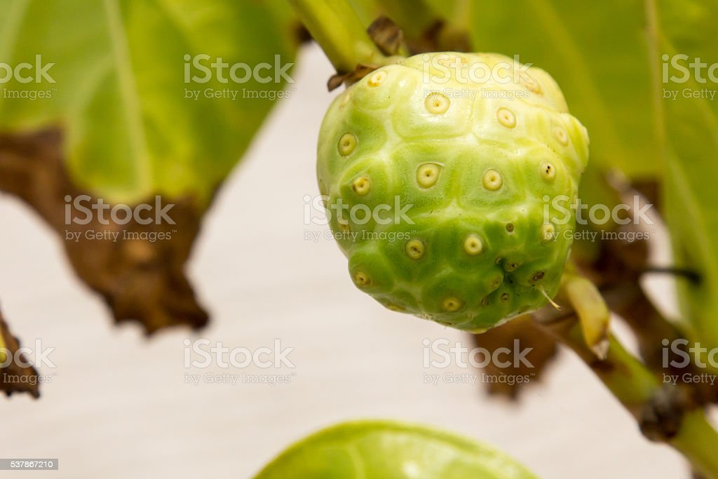 Green sugar apple fruit in Belize stock photo