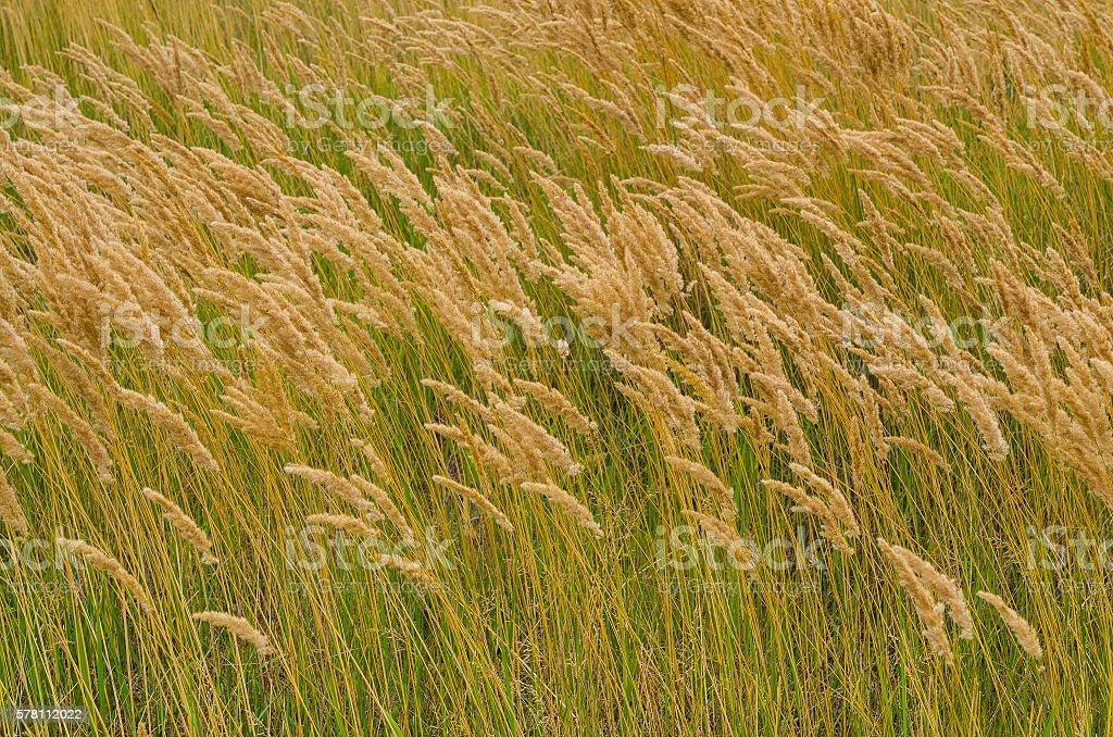 green summer grass backgrounds stock photo