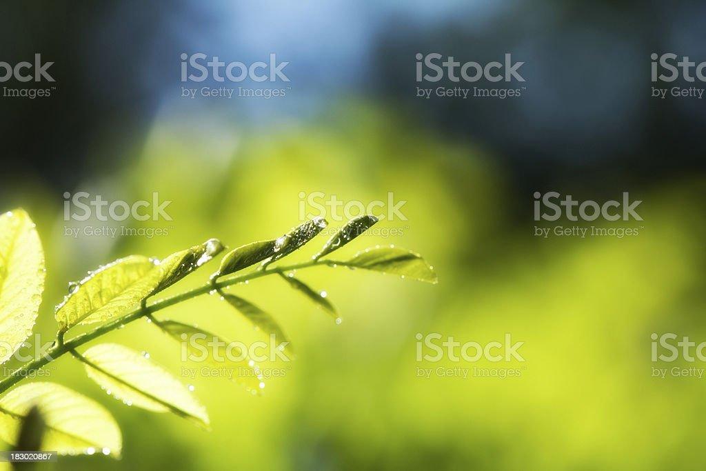 Green Summer Leaves stock photo