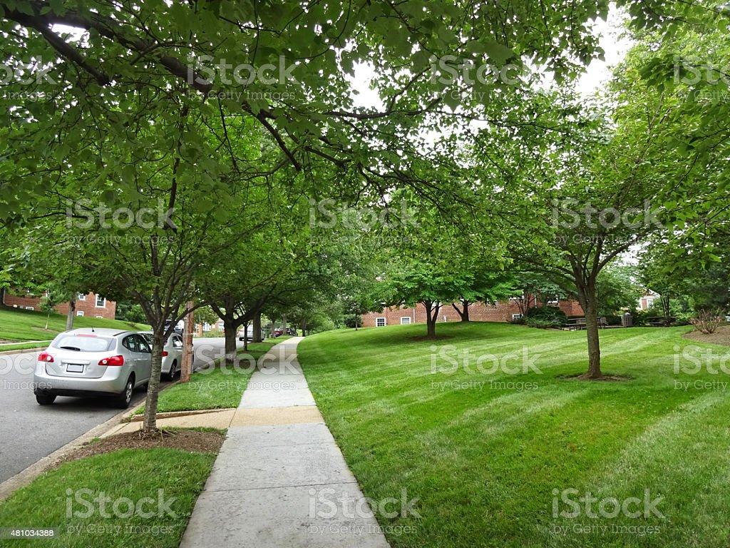 Green Summer Neighborhood stock photo