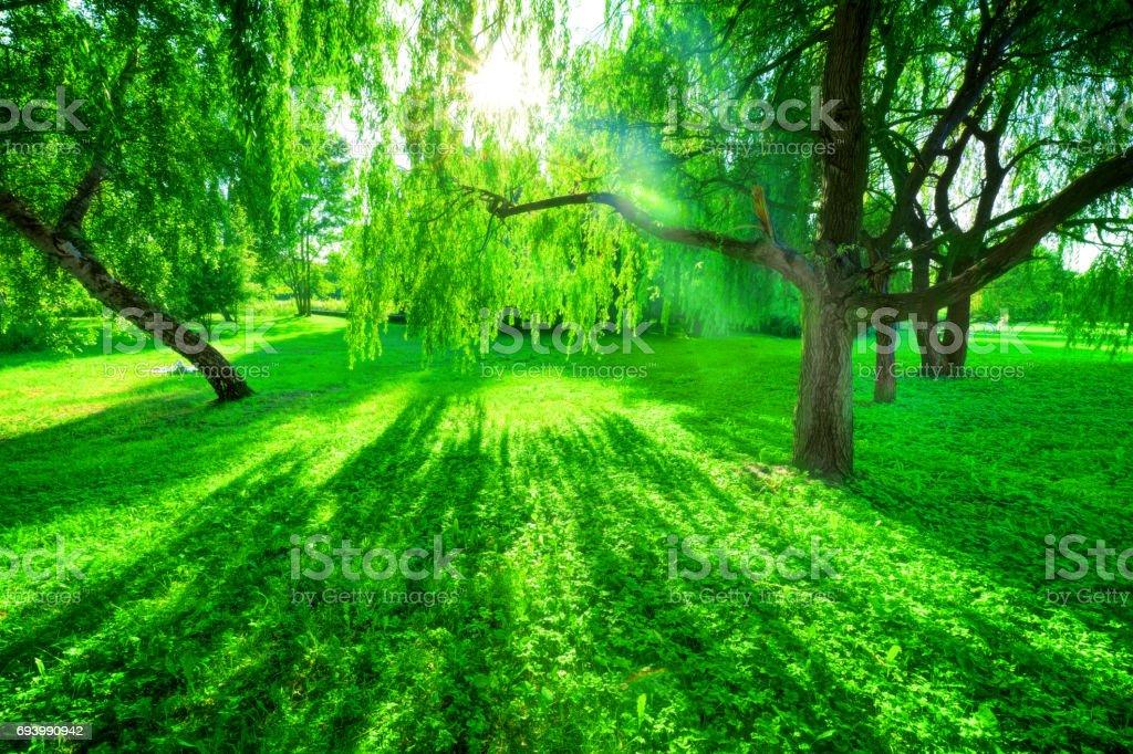 Výsledok vyhľadávania obrázkov pre dopyt sun shining through trees