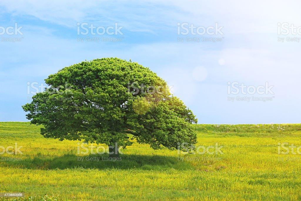 Green summer stock photo