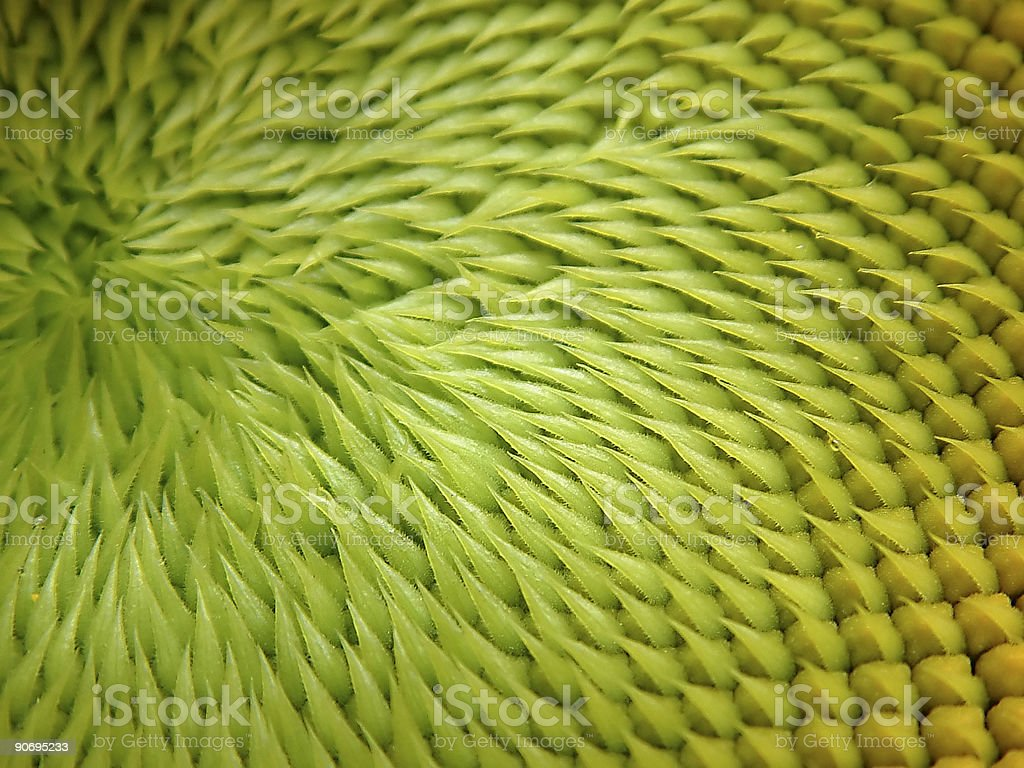 green sunflower seeds royalty-free stock photo