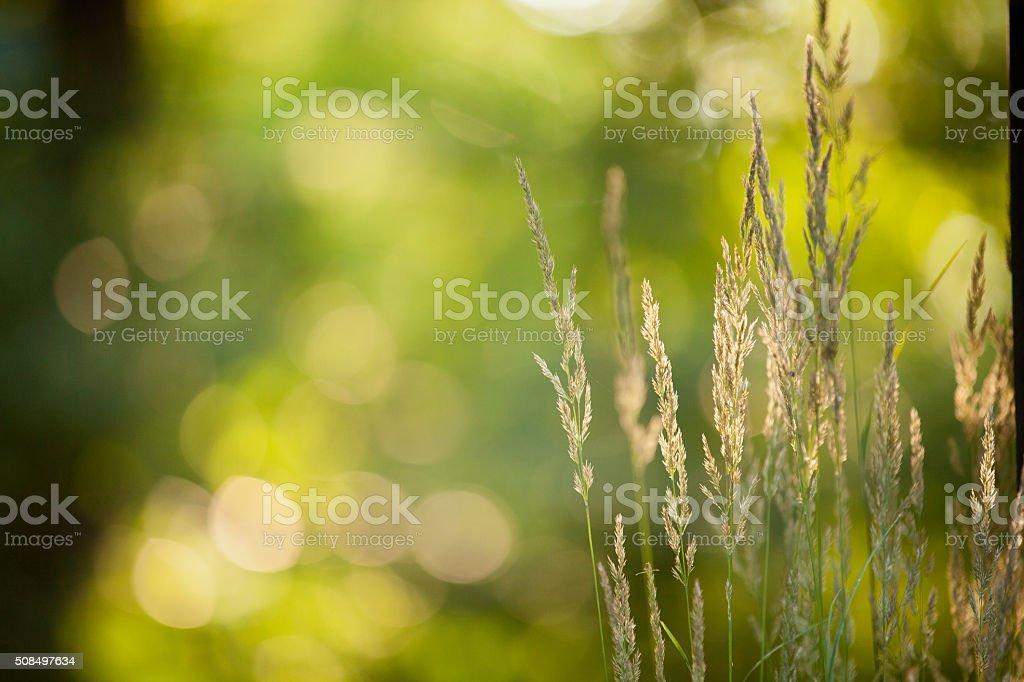 Green Sunlit Grass stock photo