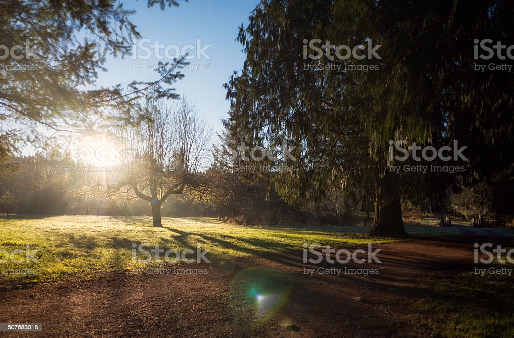 Green Sunrise g stock photo