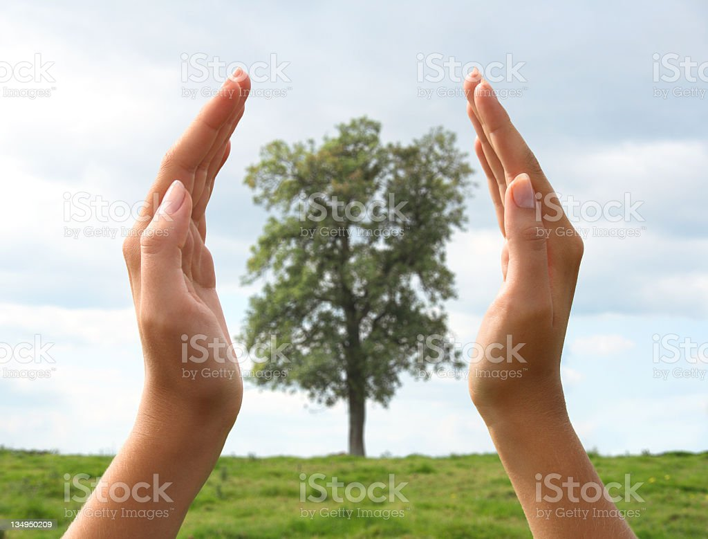 Green, sustainability, hands and protection royalty-free stock photo
