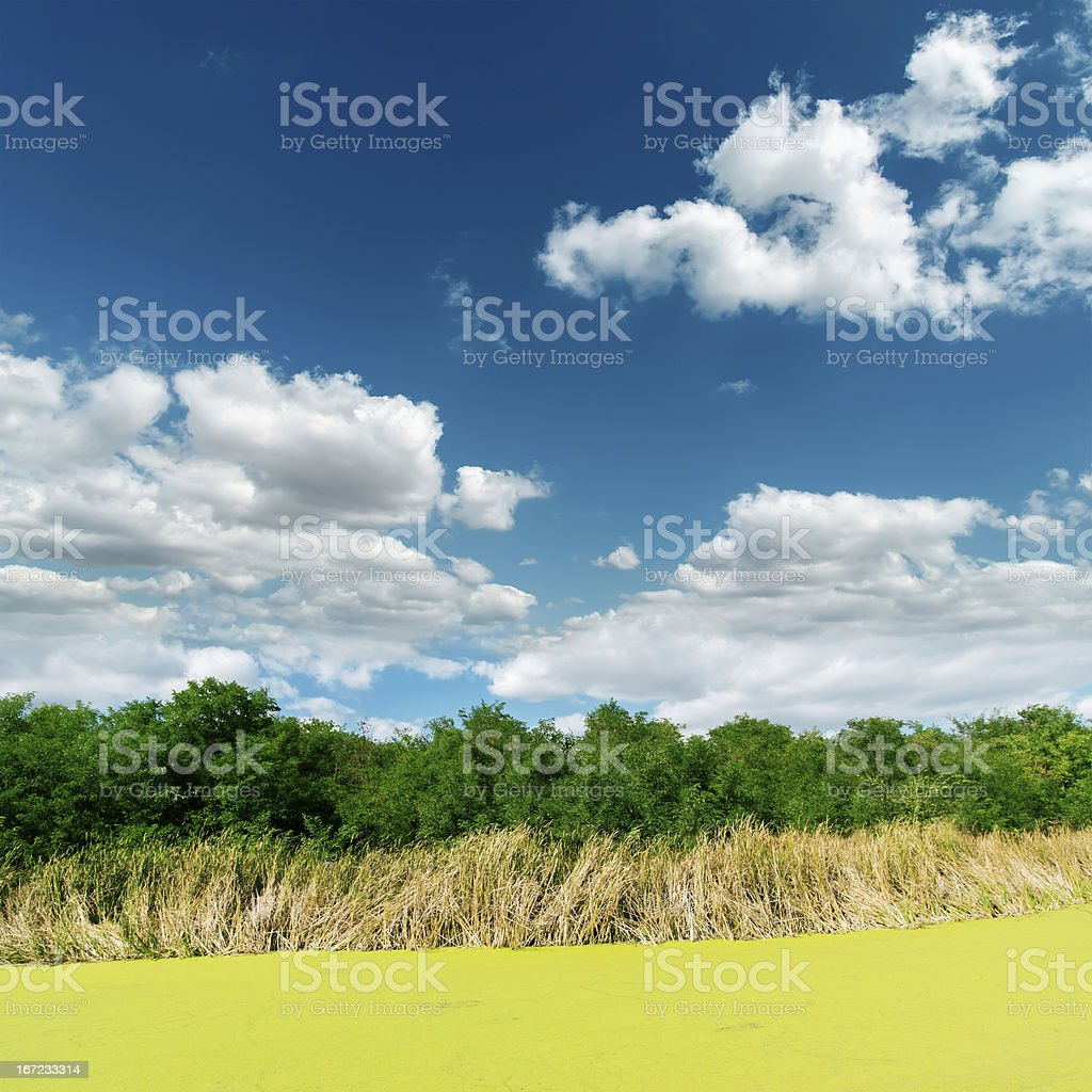 green swamp under clouds royalty-free stock photo