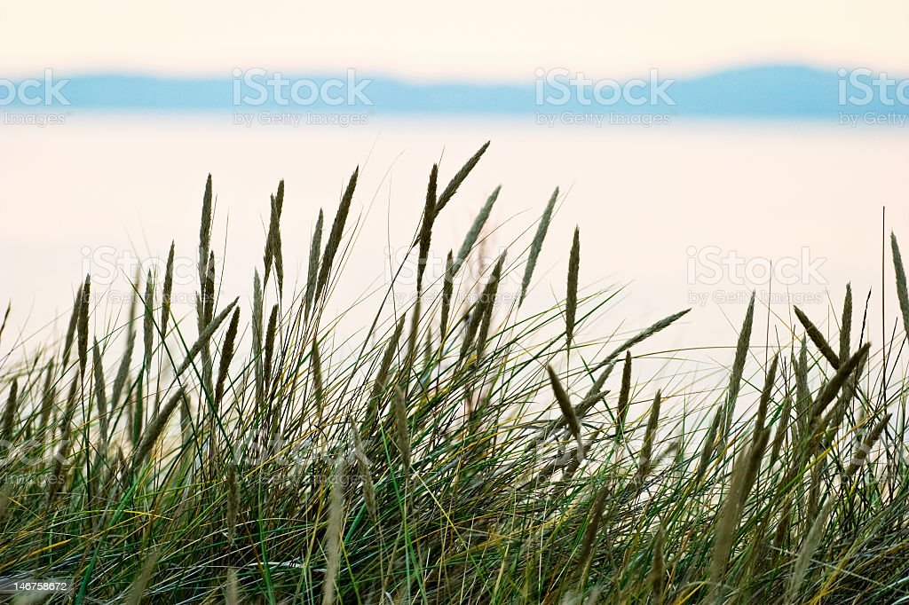 Green tall grass with serene background stock photo