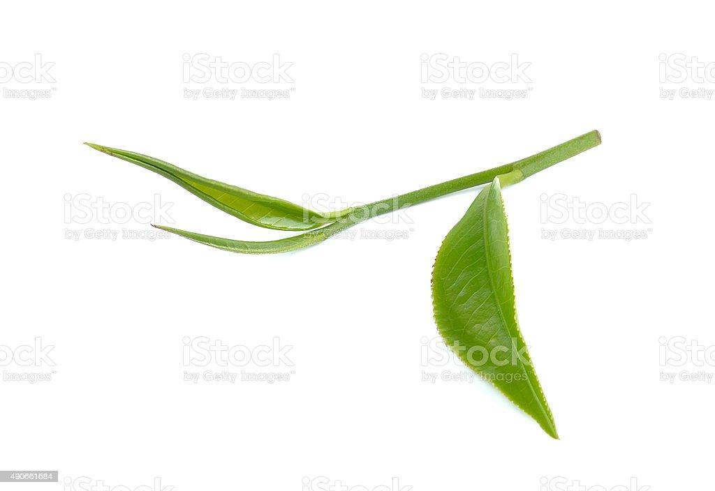 Zielona herbata Liść na białym tle zbiór zdjęć royalty-free
