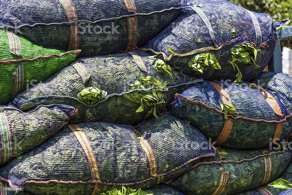 green tea leaves in sacks royalty-free stock photo