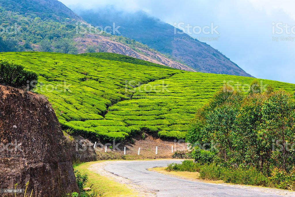 green tea plantations with road and clouds in the morning stock photo